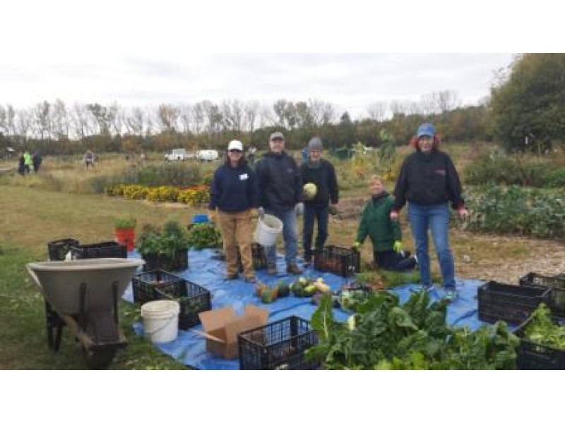 Volunteers glean 1 300 pounds of produce to donate to for Loaves and fishes volunteer