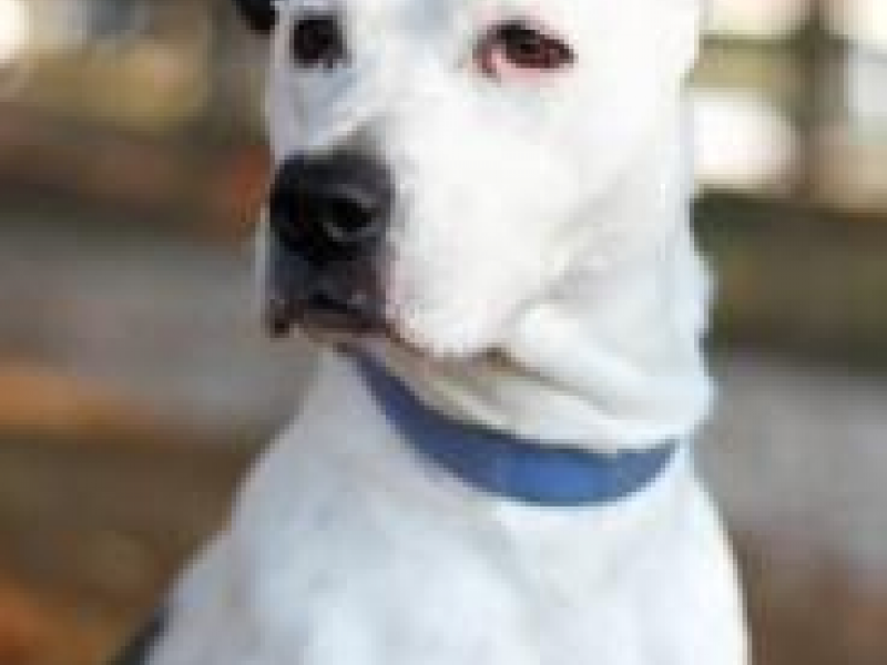 Dog Training Catonsville Md