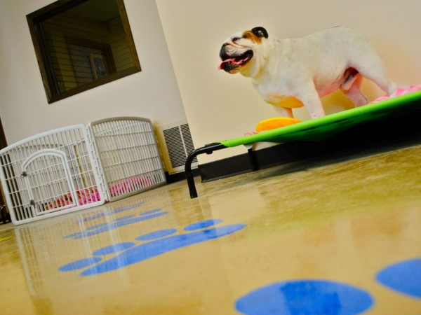 New Indoor Park has Gone to the Dogs - Minnetonka, MN Patch