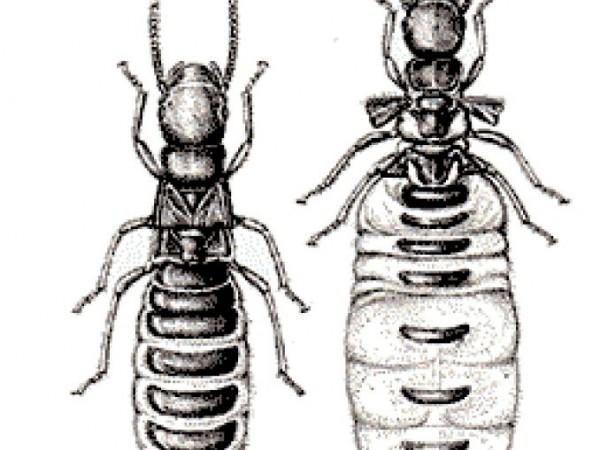Bark Beetles And Termites Eat Hibernate In Wood Sierra