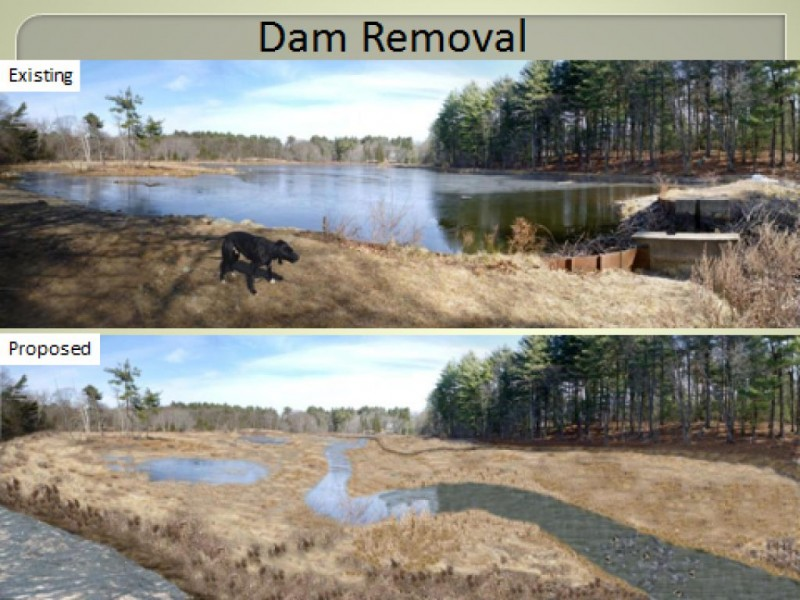 Future of weston 39 s hobbs pond dam debated weston ma patch for Pond dam design