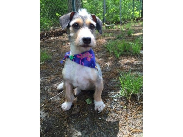 Dog Grooming Old Lyme Ct