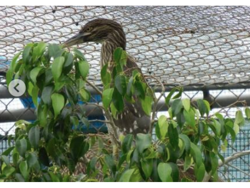 Men Charged with Animal Cruelty for Allegedly Cutting Tree with Nesting Birds