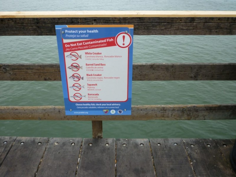 Anglers Warned About Eating Contaminated Fish Near Sm Pier