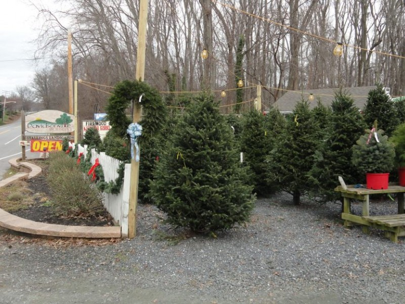 Pricing Guide: Local Christmas Tree Lots