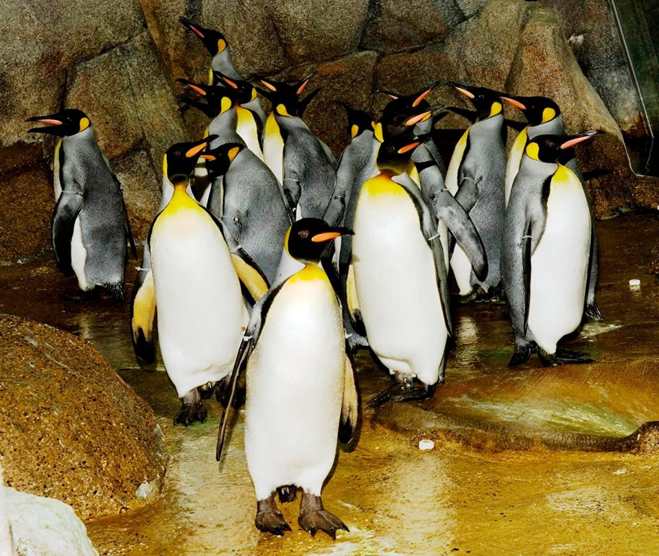 Watch Penguin Cam Live: Sneak a Peek of Detroit Zoo's Penguins