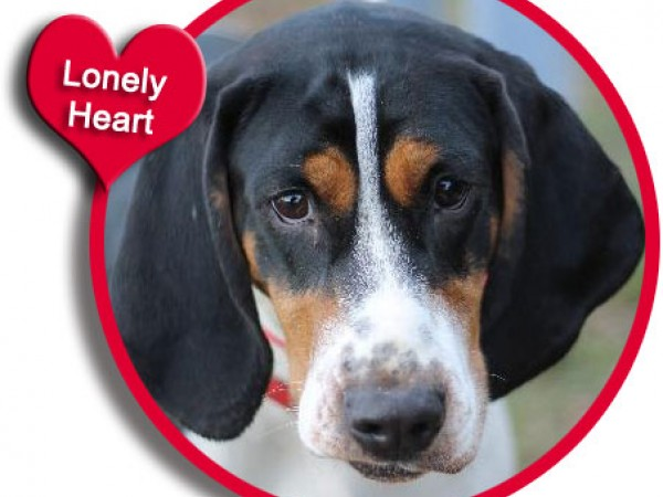 Large Breed Dogs For Adoption In Michigan