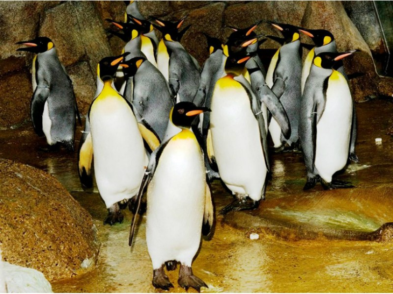 Zoo's Penguin Conservation Center to Open in Early 2016
