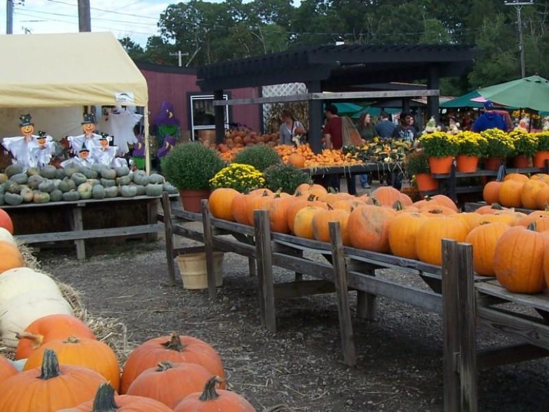 Organic Apple Picking In Long Island Ny
