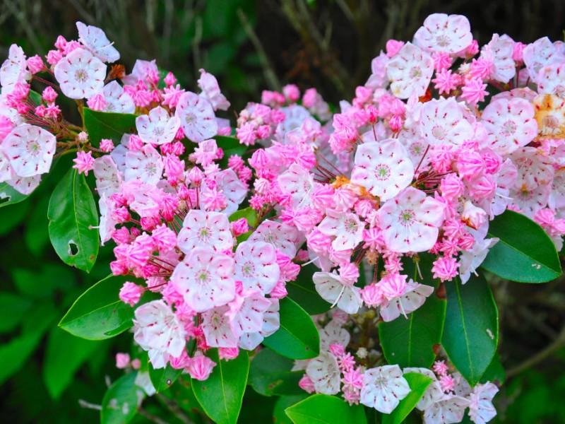 Calendar Bulletin Board Set : Mountain laurel sanctuary at peek bloom tolland ct patch