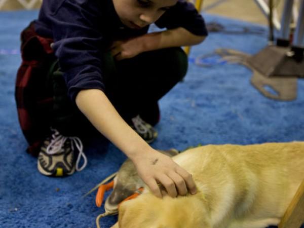 American School Of Dog Grooming Michigan