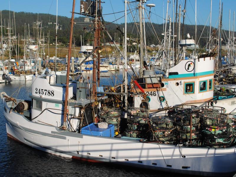 More waiting than fishing on crab season 39 s opening day for Half moon bay pier fishing