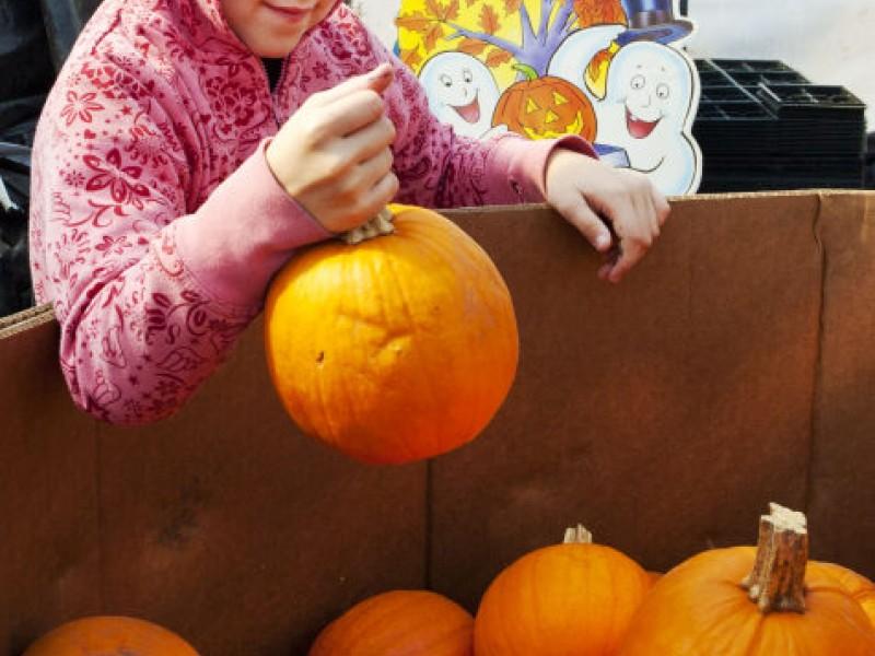 Pumpkin patch academy cranston ri