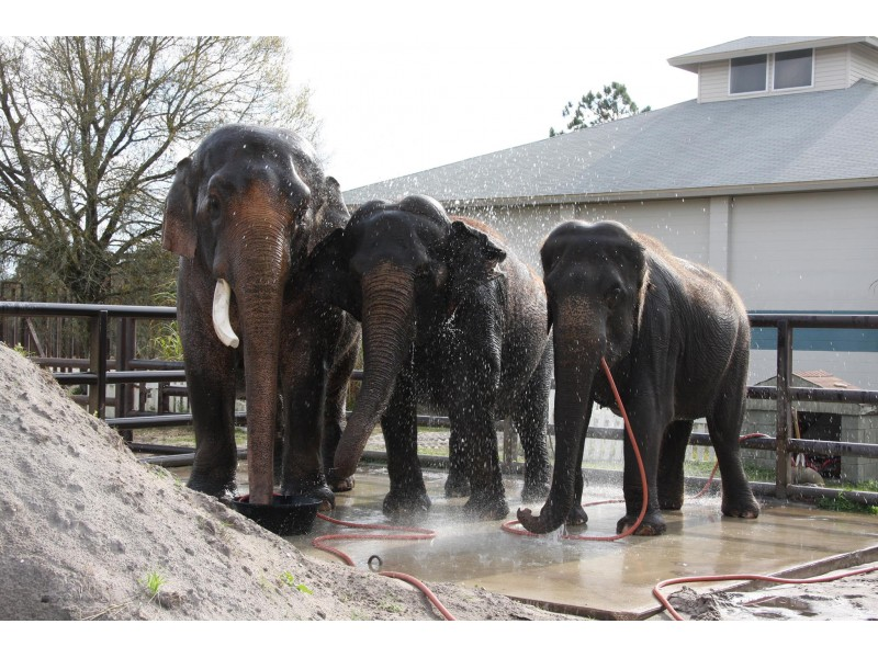 New Lenox Illinois >> Ringling Bros. Circus Plans to Phase Out Elephants - New ...