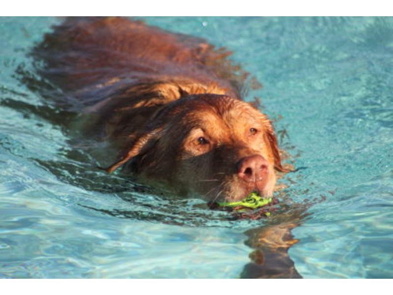 Puppy Pool Party Puppy Swim Party Coming to dc