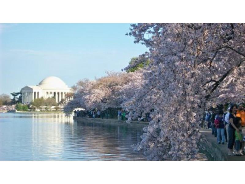 Dc cherry blossoms 2015 webcam