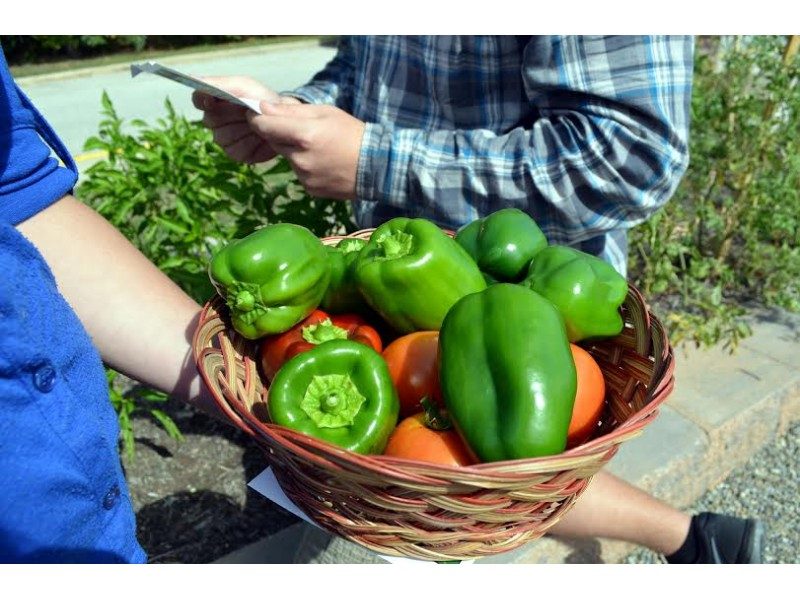 Timber Creek Garden On Display For Jersey Fresh Farm To