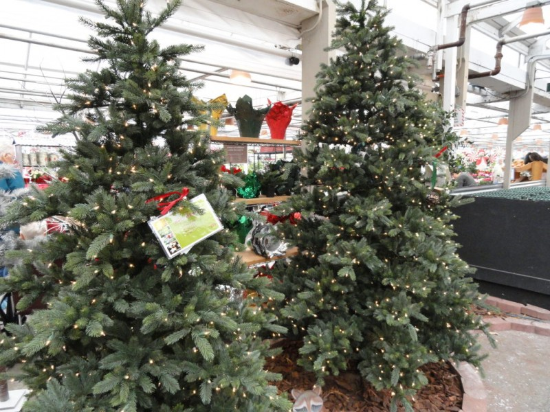 Where To Buy (or Rent) Christmas Trees (Cut, Living Or