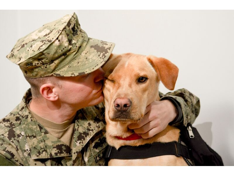 Veterans Day For Dogs