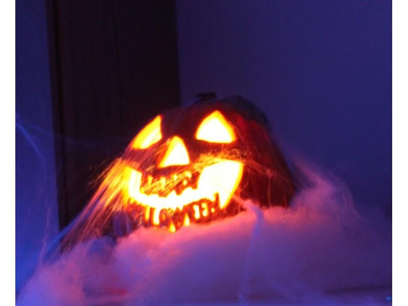 Poodle Pumpkin Carving Pumpkin Carving Secrets