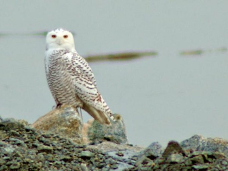 Bird Sightings In Rhode Island