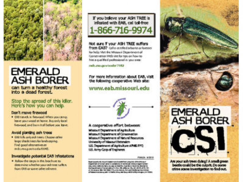 emerald ash borer research paper The emerald ash borer (eab)  the insecticides available for treating eab have been shown to be effective in protecting ash in university research trials.