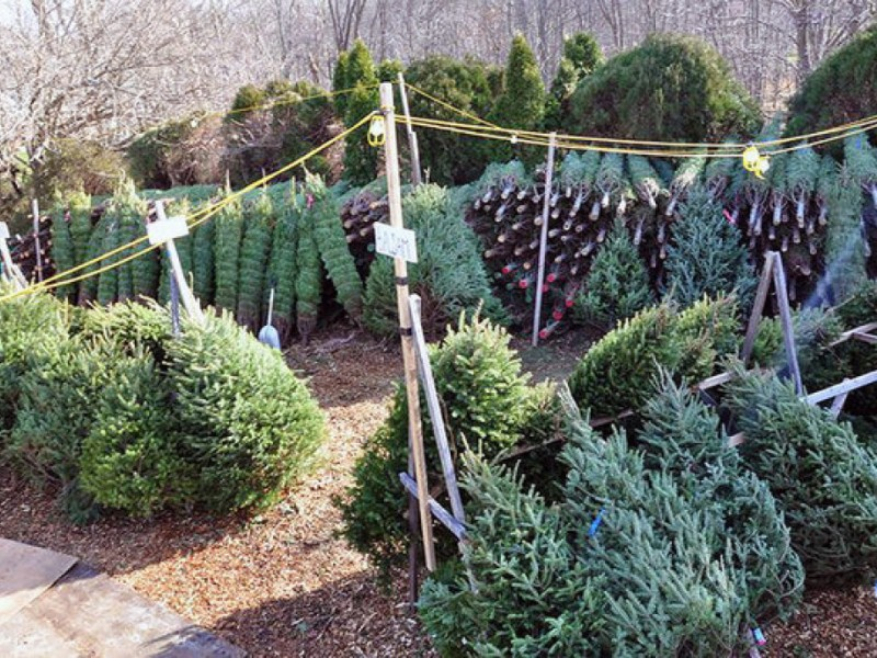 3 ways to get rid of your christmas tree - Christmas Tree Removal