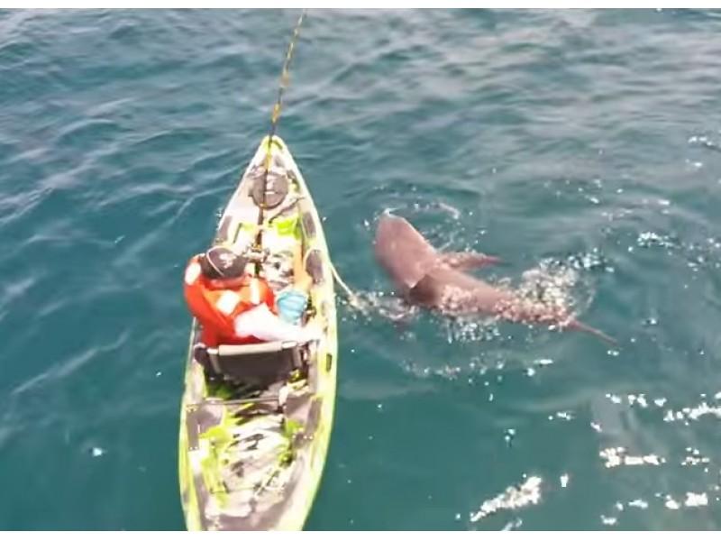 Watch Bull Shark Flips Angler S Kayak Bradenton Fl Patch