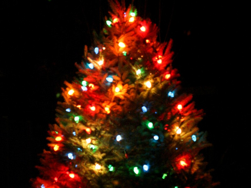 five great places to buy a christmas tree in the stoneham region - Buy A Christmas Tree