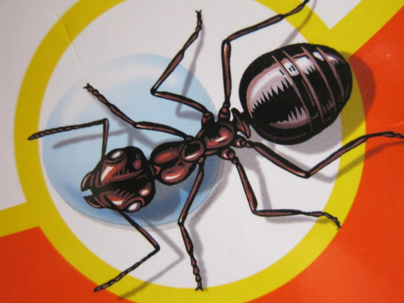 When ants attack how to get rid of the summers most annoying when ants attack how to get rid of the summers most annoying insects ccuart Choice Image