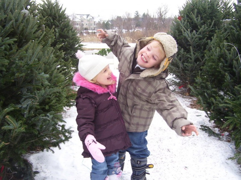 Top 5 Longest Lasting Christmas Trees - Oakland Township, MI Patch