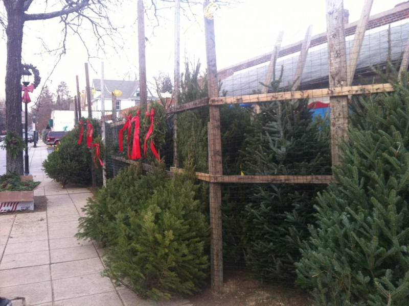 where to buy christmas trees in lower merion and narberth 0 - Where To Buy Christmas Trees