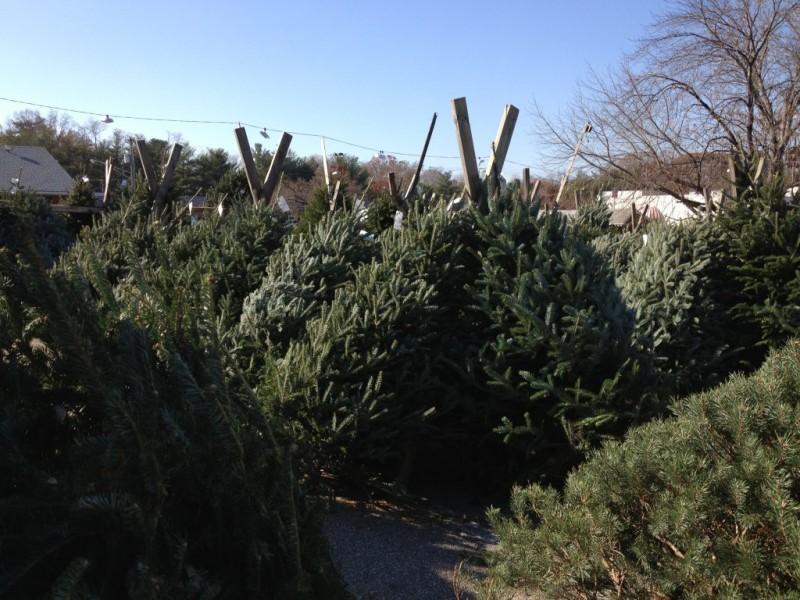 where to buy a christmas tree in severna park 0 - Where To Buy A Christmas Tree