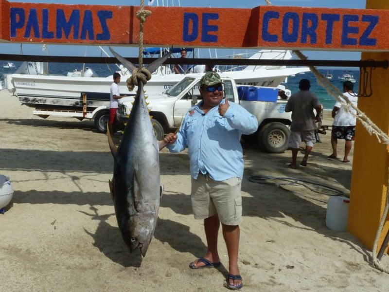 Fishing tuna move in tiger shark caught on light line for Tuna fishing california