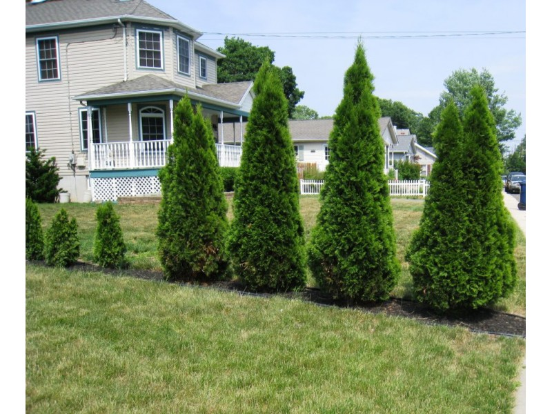 Hedging for privacy lawrenceville nj patch - Shrubbery for privacy ...