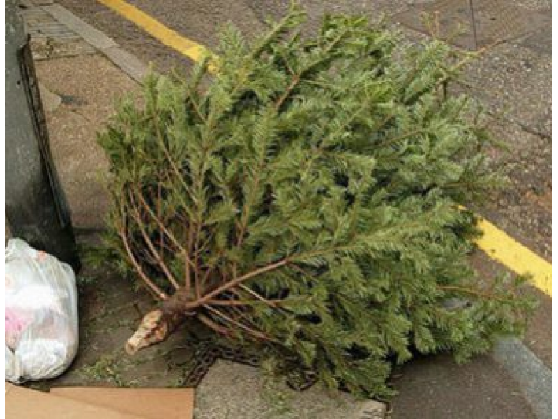 Wondering How to Get Rid of Your Christmas Tree? | Chelmsford, MA ...