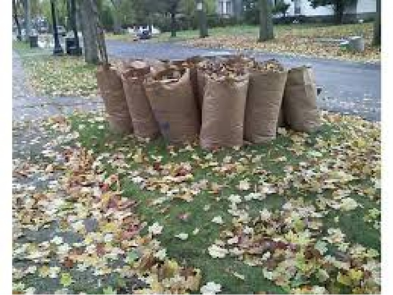 How To Dispose Of Leaves This Fall In Chelmsford