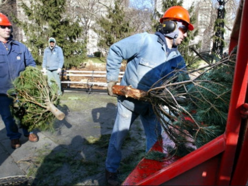Live Christmas Tree Recycling This Weekend - Smyrna, GA Patch