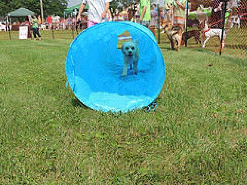 Rotary Glen Dog Park