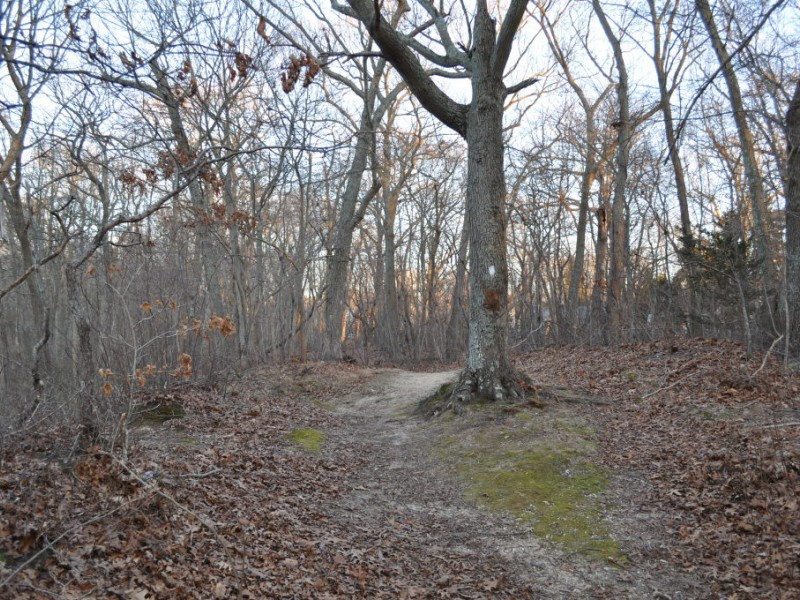 GALLERY: Millers Pond, Alive During Winter - Smithtown, NY ...