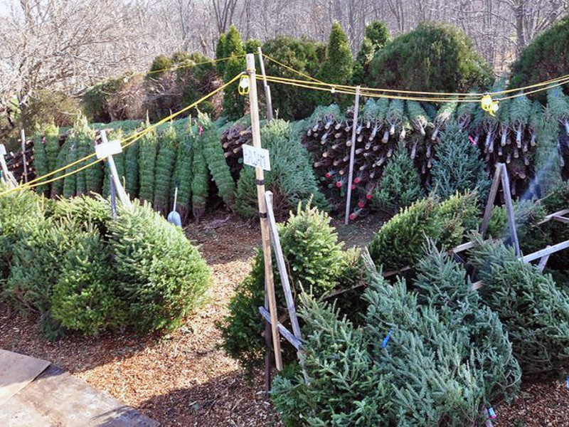 where to buy christmas trees near plymouth canton - Where To Buy Christmas Trees