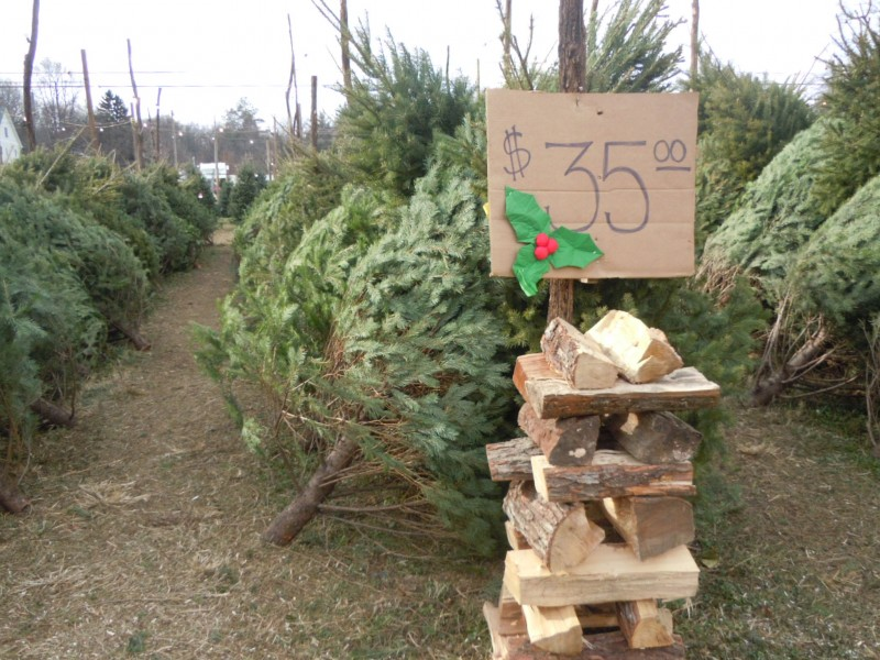 where to buy christmas trees in marple newtown - Where To Buy Christmas Trees