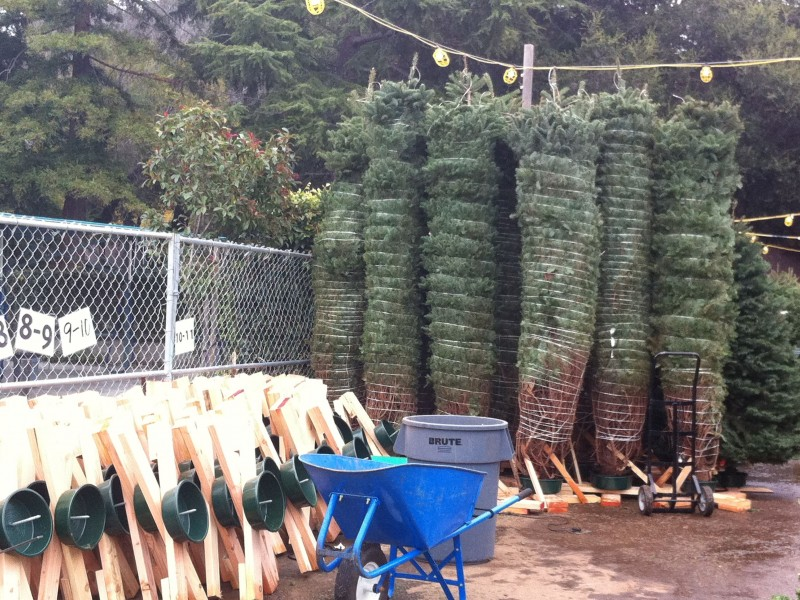 guide where to buy a christmas tree in redwood city 0 - Where To Buy A Christmas Tree