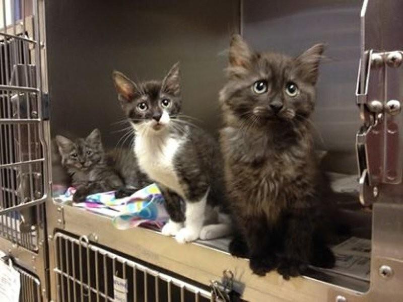 Rescue Cats No Garden