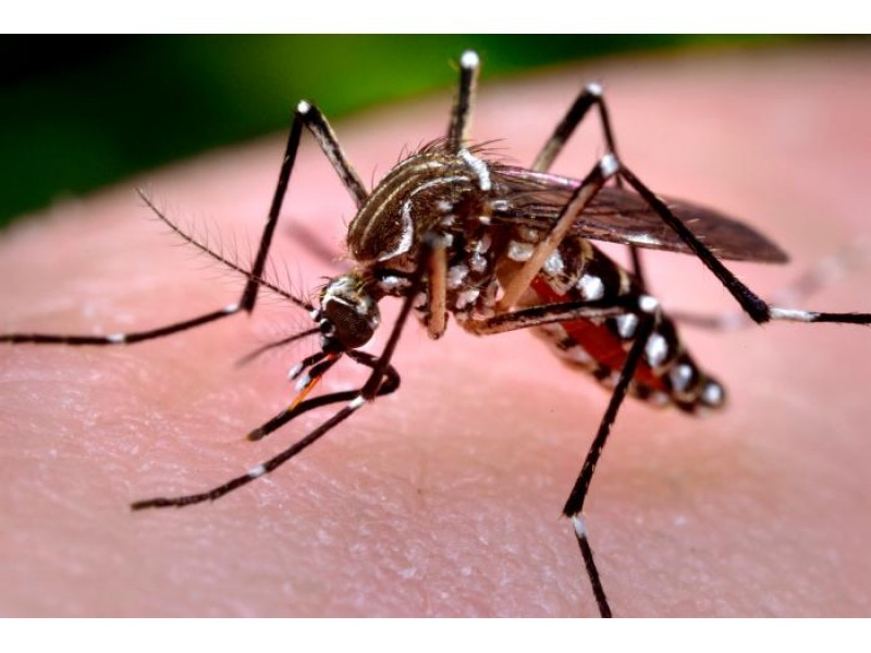 Another CT Zika Virus Case Confirmed, State Issues Travel...