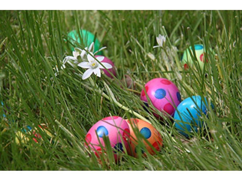 Free Easter Egg Hunt at McCue Garden Center   Patch