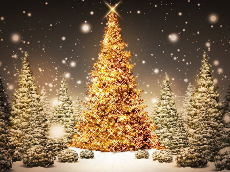 LeBeau Gardens Inc Downingtown PA Phoenixville PA Patch - Christmas Tree In Downingtown Pa