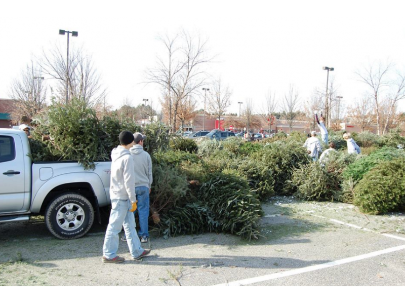 Recycle Your Christmas Tree on Saturday in Johns Creek - Johns ...