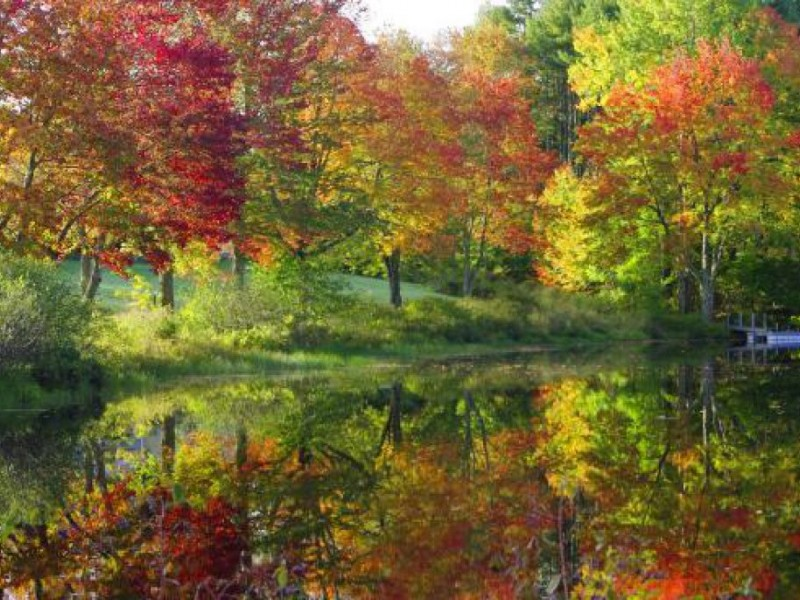 a guide to fall foliage in new england
