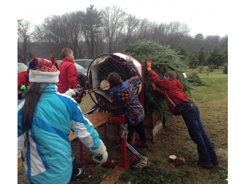 Local Christmas Tree Farms Near Stoughton - Stoughton, MA Patch
